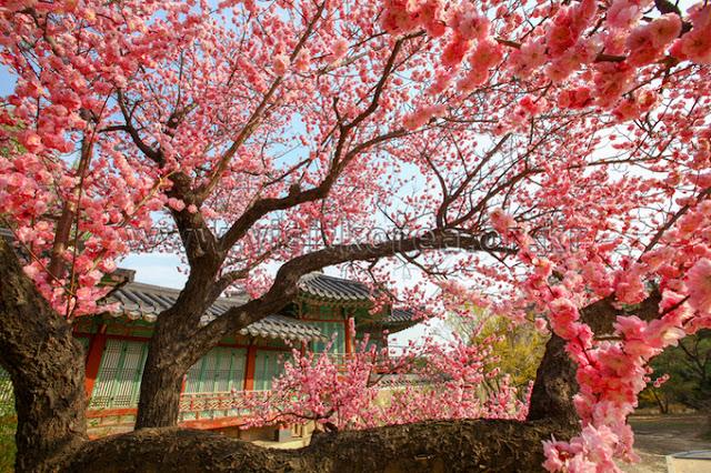 5-tips-traveling-pada-musim-semi
