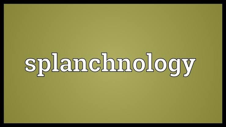 Splanchnologi