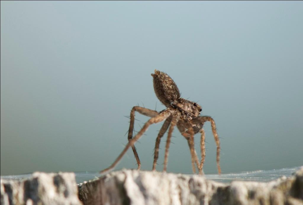 Ohio Birds And Biodiversity Ballooning Spiders