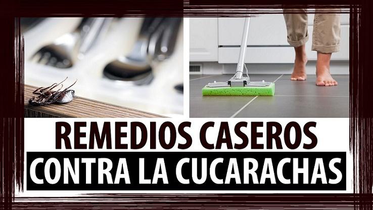 Conspiraciones y noticias actuales remedios caseros - Remedios para eliminar cucarachas ...