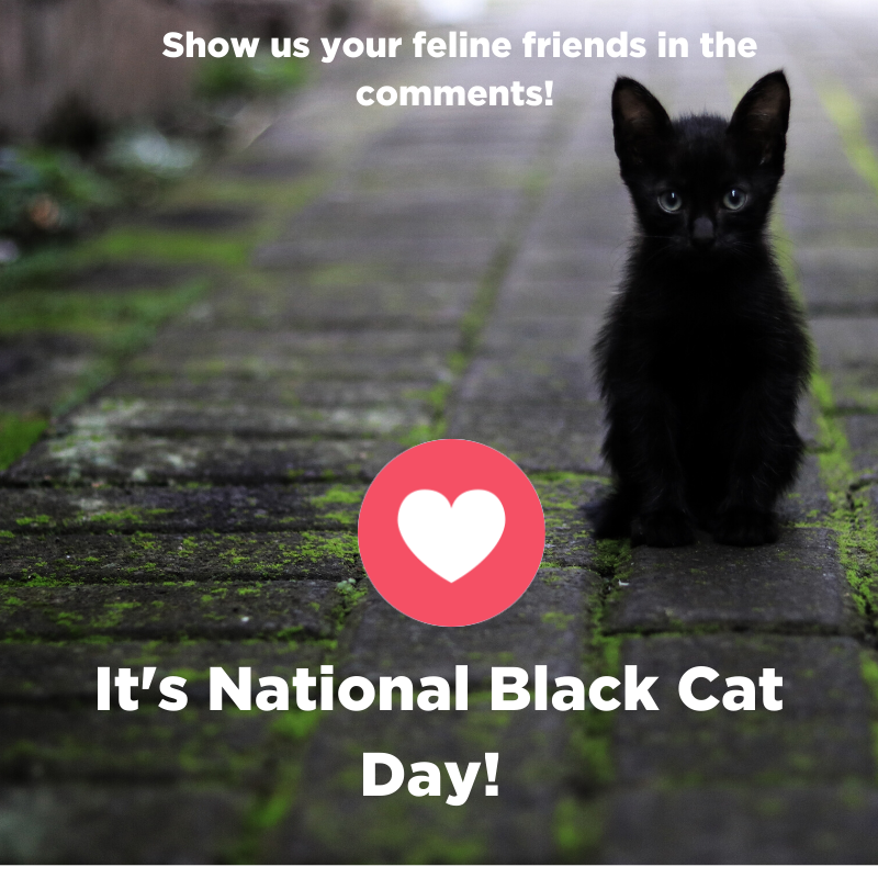 National Black Cat Day Wishes Beautiful Image