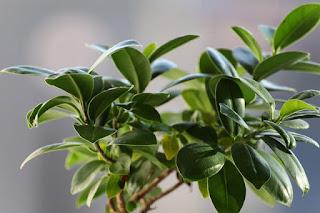 Top 6 air purifying plants NASA : GARDEN