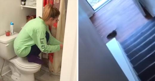 El video viral que derrotó a una rata