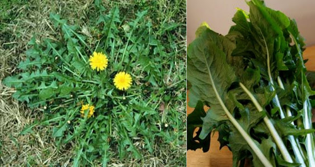 THIS PLANT IS EVERYWHERE BUT NO ONE KNOWS THAT IT CAN DO THESE TO YOUR BODY IN JUST 48 HOURS!