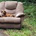 ΠΑΡΑΤΗΣΕ τον σκύλο μαζί με την πολυθρόνα και την τηλεόραση