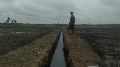 Petani di Geragai Khawatir Perkembangan Padi Terhambat