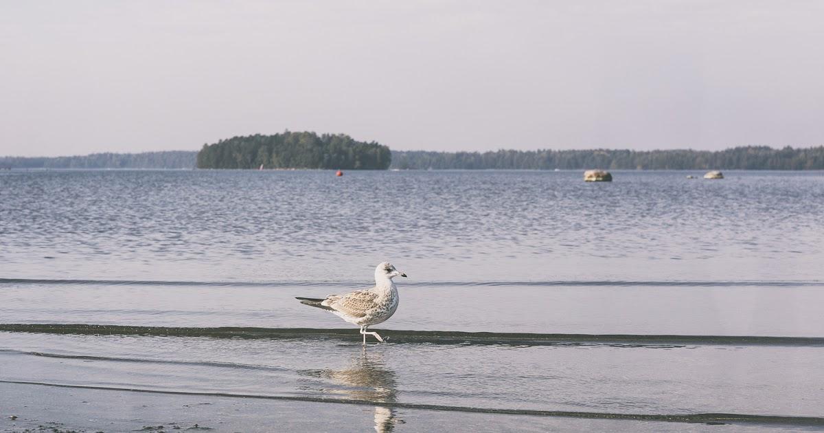 Kallahdenniemellä sijaitsee Helsingin komein harju ja suojeltu rantaniitty