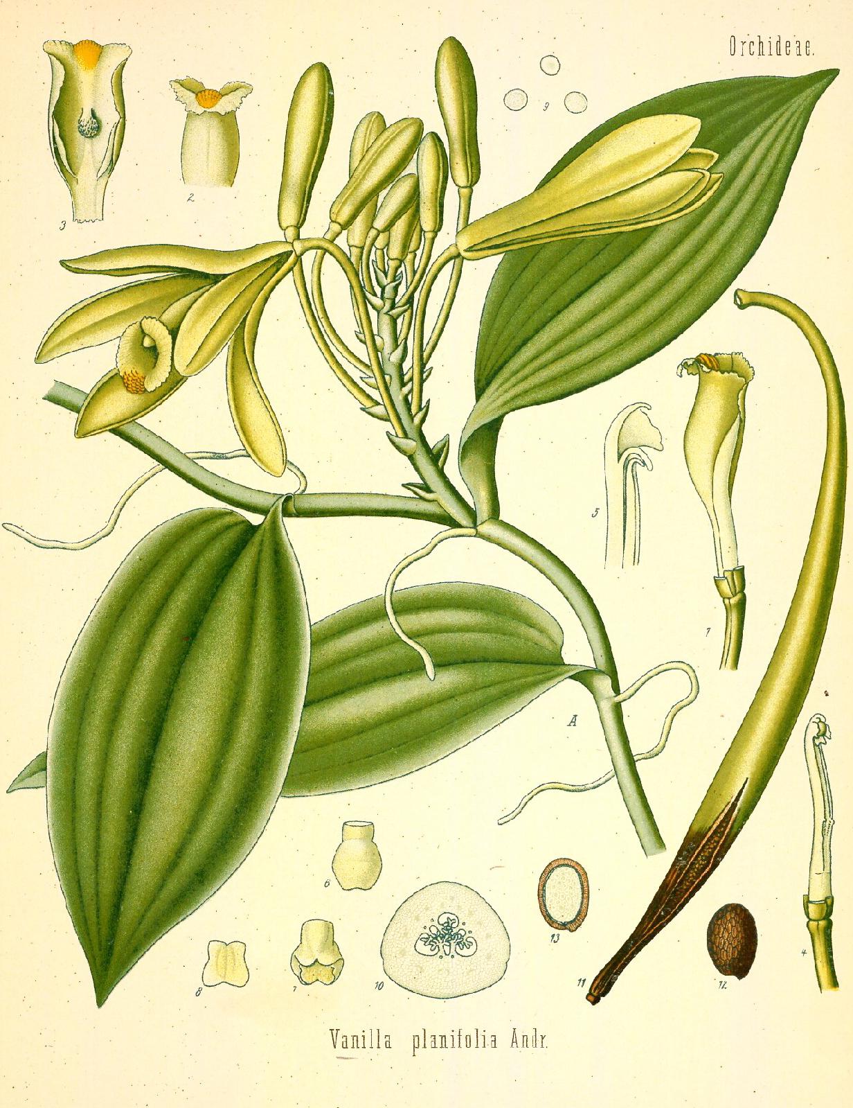 Goede My Top Twelve Vanilla Perfumes   The Non-Blonde CS-08