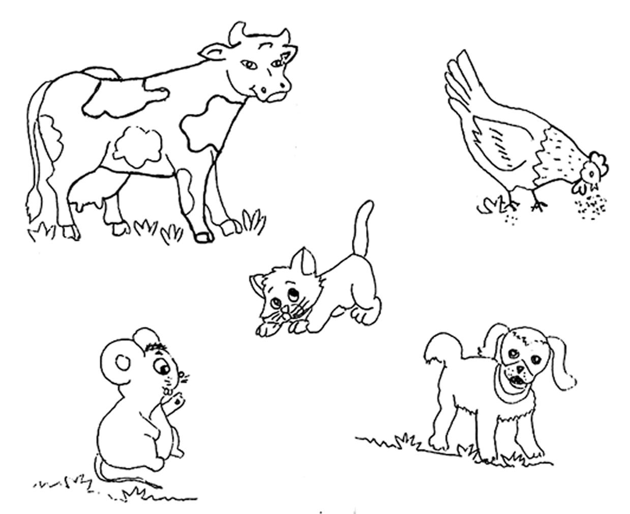 Imagenes De Animales Omnivoros Para Colorear Animales