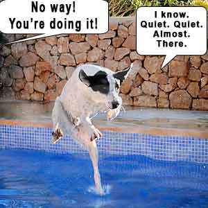 The teach Zone: Funny dog videos, puppies, dog training ...