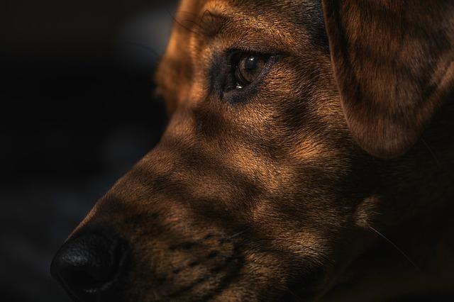 Saat Seekor Anjing Marah Ke Misionaris Penghina Nabi, 4.000 Orang Kembali Masuk Islam