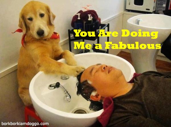 Doggo Doing A Fabulous