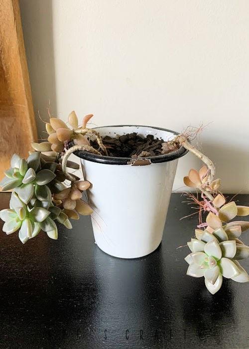 succulents in enamelware pots