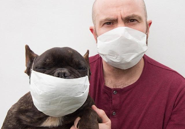 В ВОЗ заявили, что люди могут заражать домашних животных коронавирусом