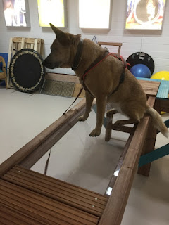 clinica reabilitação veterinária