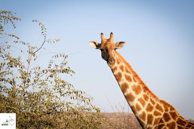 África do Sul - Safári em Pilanesberg