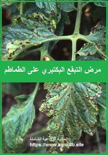 مرض التبقع البكتيري على الطماطم Bacterial Speck