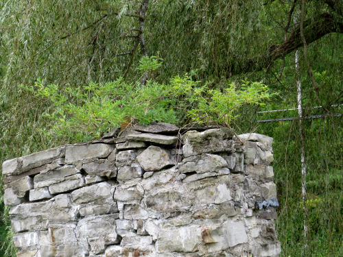 small trees growing on a stone chimney