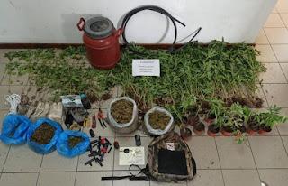 202 δενδρύλλια και 2,7 κιλά κάνναβης με σύλληψη στην Αλαγονία