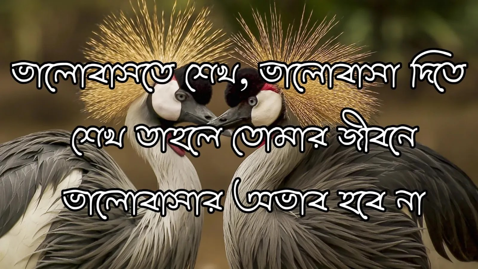 Bangla love poem quotes