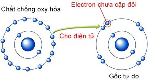 Các chất chống oxy hóa sẽ cho gốc tự do 1 electron để chúng trở nên ổn định và không phá hoại các tế bào khác
