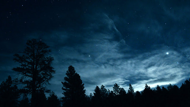 Trees beneath night sky