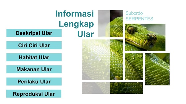Informasi lengkap ular