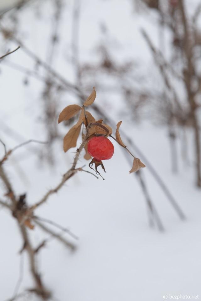 зимние ягоды фото