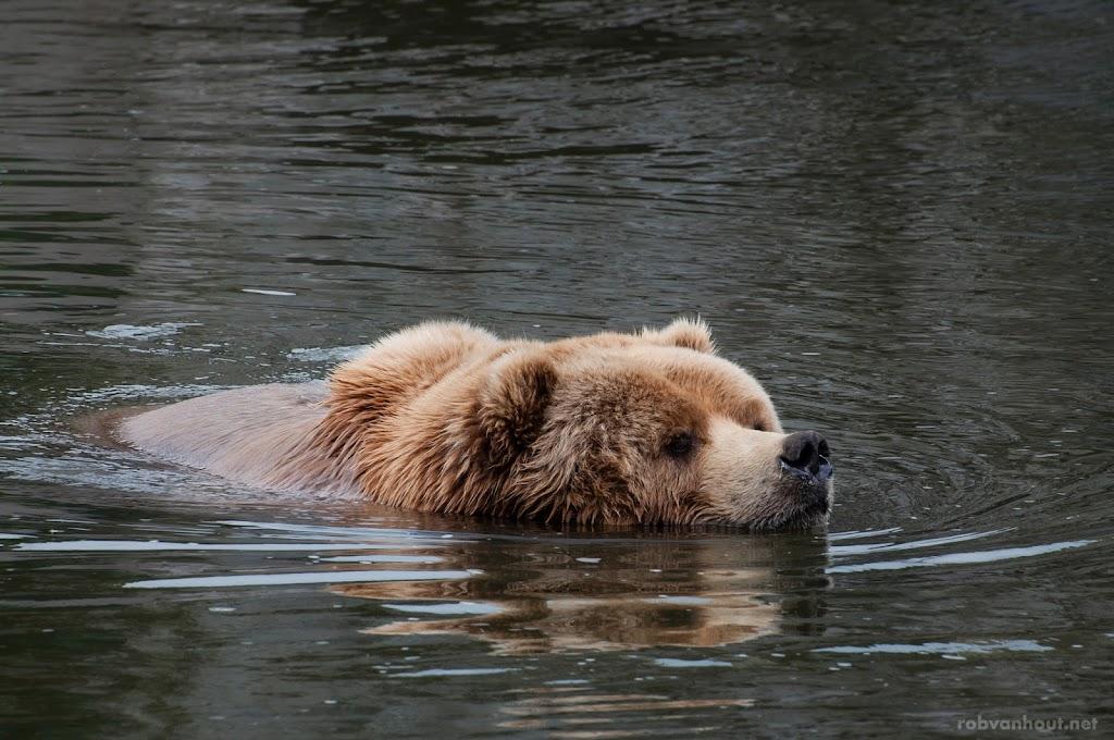<b>Kodiak Bear</b> Zoom Erlebniswelt