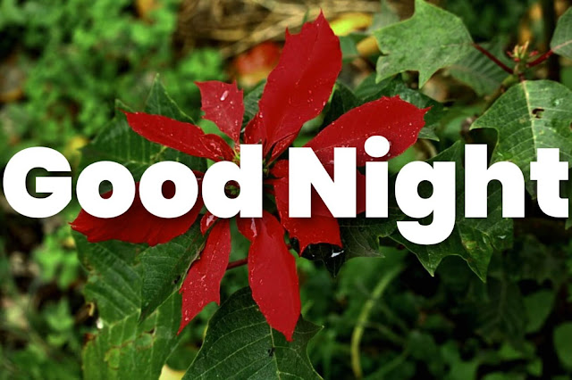 flower good night images hd