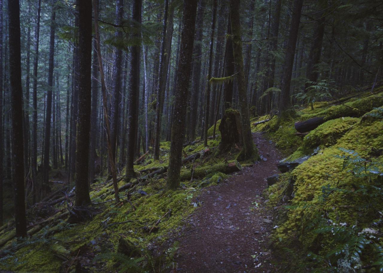 его экстренно картинки леса как в сумерках диск для