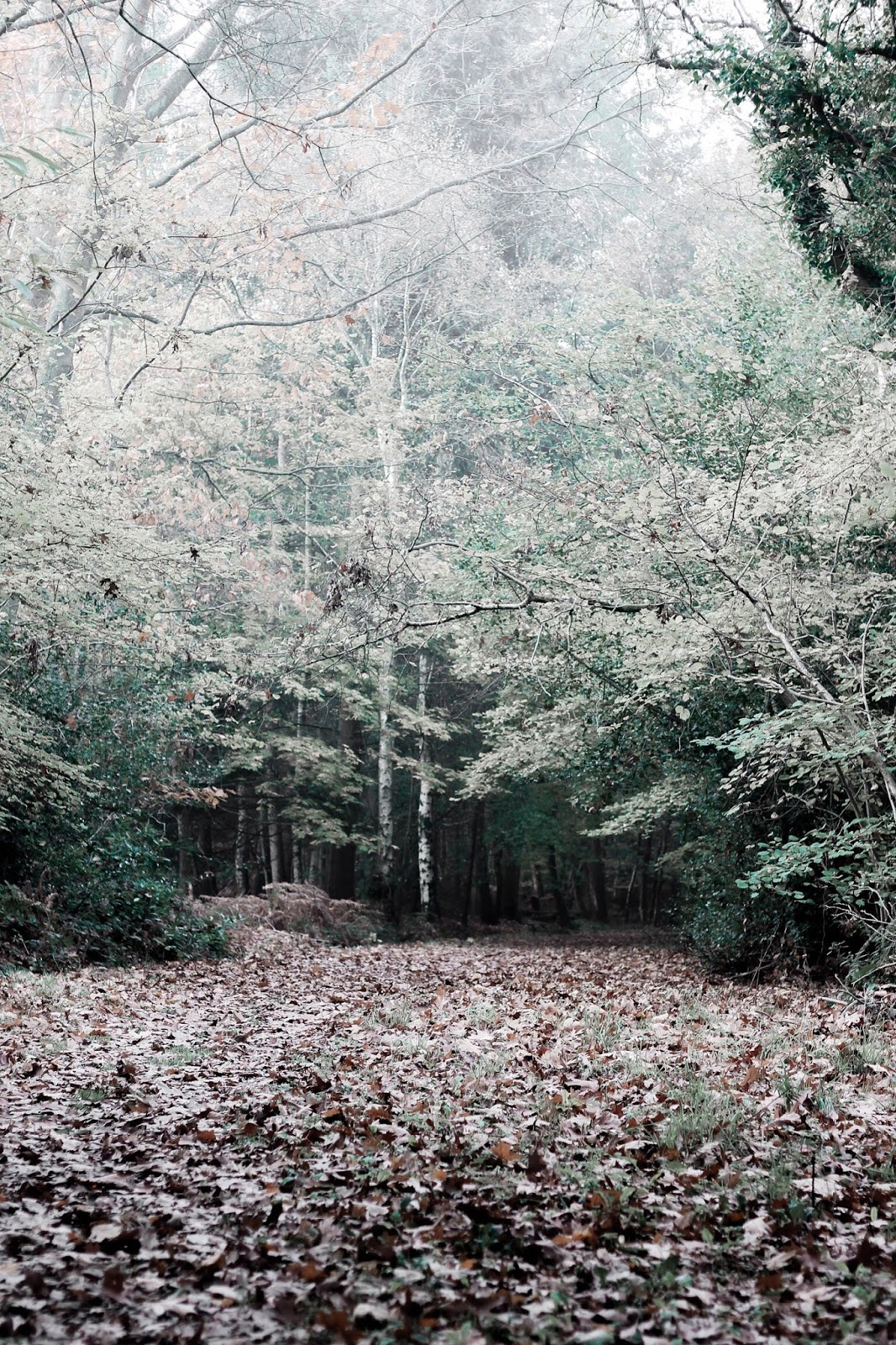 Woodland Covered in Brown Leaves Autumn Winter