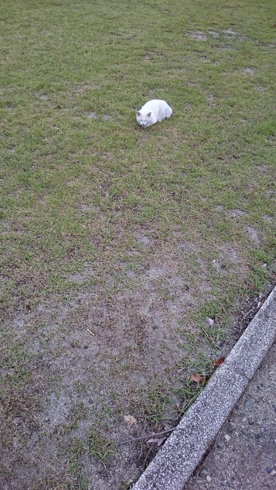 公園で見かけた白猫