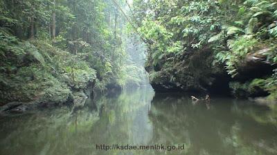 Taman Nasional Bukit Tiga Puluh (TNBT)