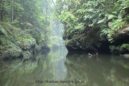 Taman Nasional Bukit Tiga Puluh (TNBT) Riau yang Kaya Flora Fauna