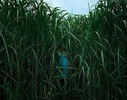 in the tall grass movie in tamil