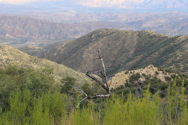 Guided%2BCoues%2BDeer%2BHunts%2Bin%2BSonora%2BMexico%2Bwith%2BJay%2BScott%2Band%2BDarr%2BColburn%2BDIY%2Band%2BFully%2BOutfitted%2B14.JPG