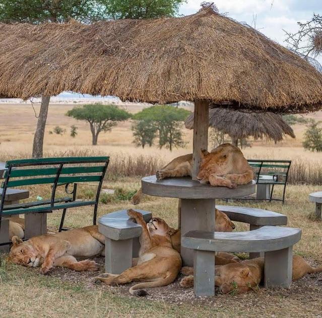 Picnic in Africa