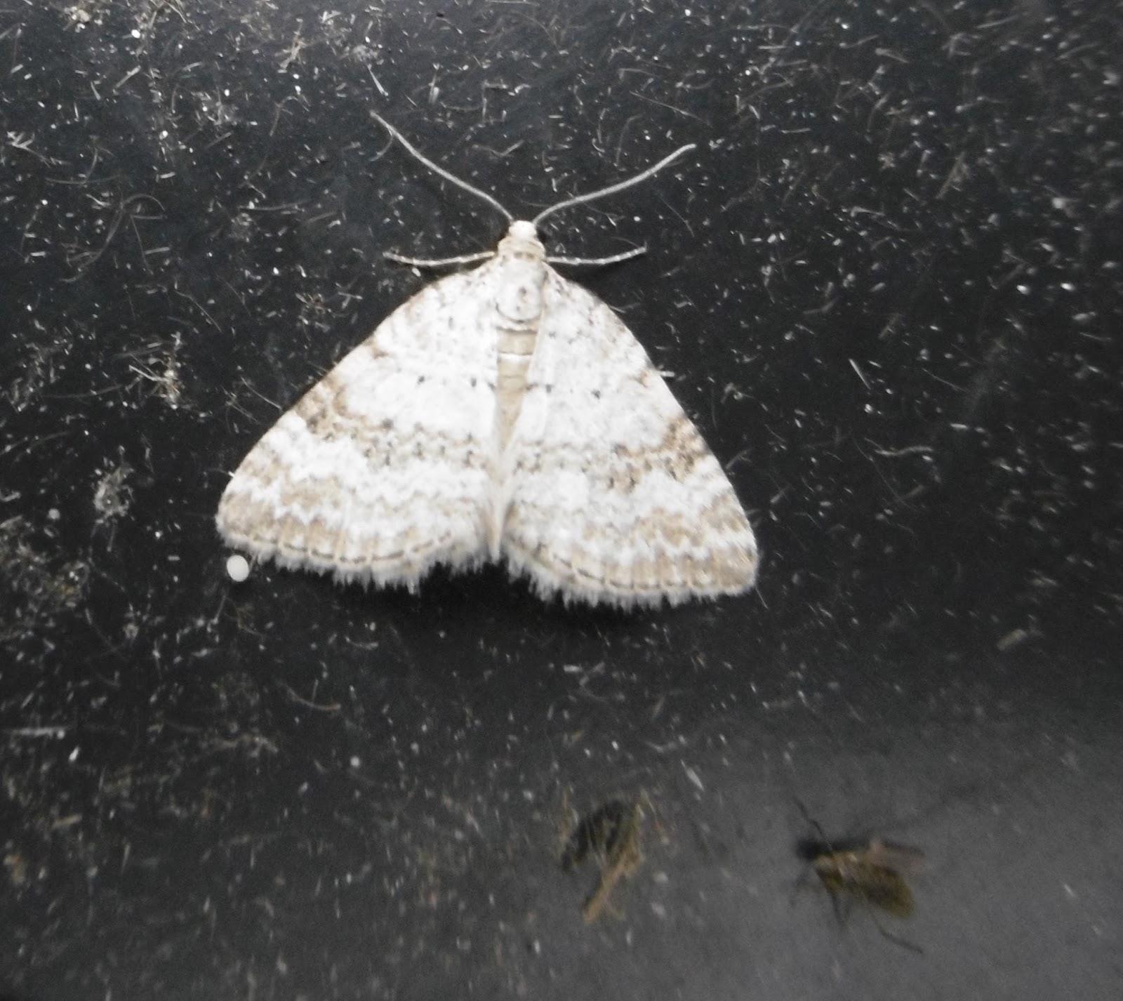 Martin's Moths: Cats online
