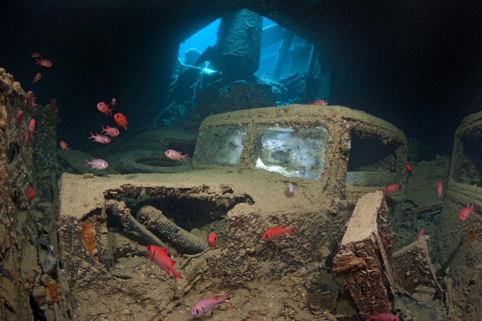 Интересные виды которые можно встретить под водой
