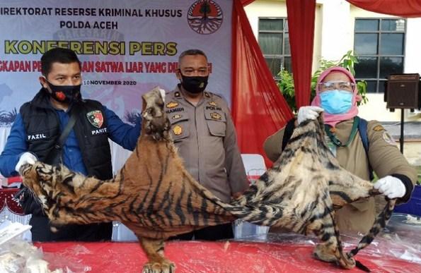Simpan Organ Harimau-Sisik Trenggiling Senilai Rp 6,3 Miliar, Pria Aceh Ditangkap