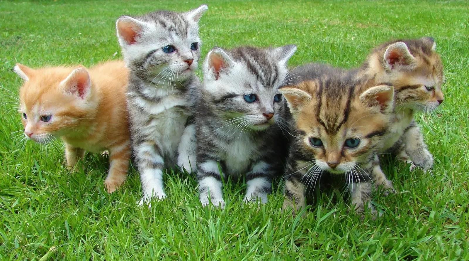 صور قطط ملونة وعنينها ملونة