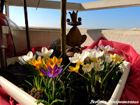 Balkon im Frühling
