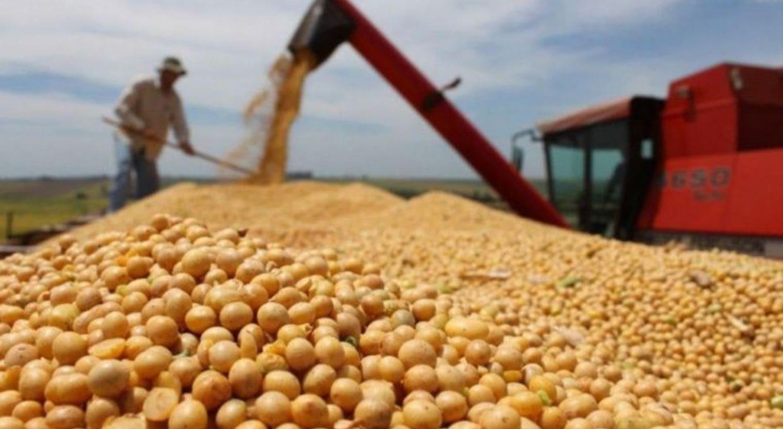Operan en baja la soja, el maíz y el trigo en el Mercado de Chicago