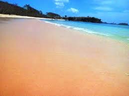 http://www.lomboksociety.web.id/2018/01/6-fakta-menarik-tenttang-pantai-pink.html