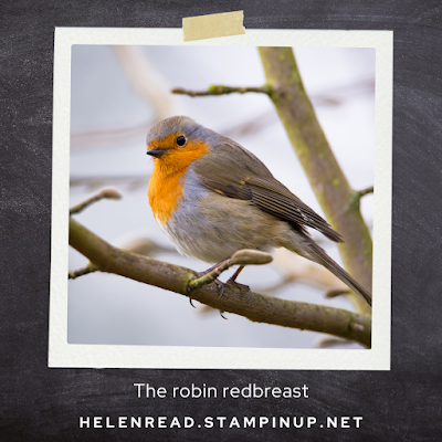 Robin for Stampin' Up Christmas cards