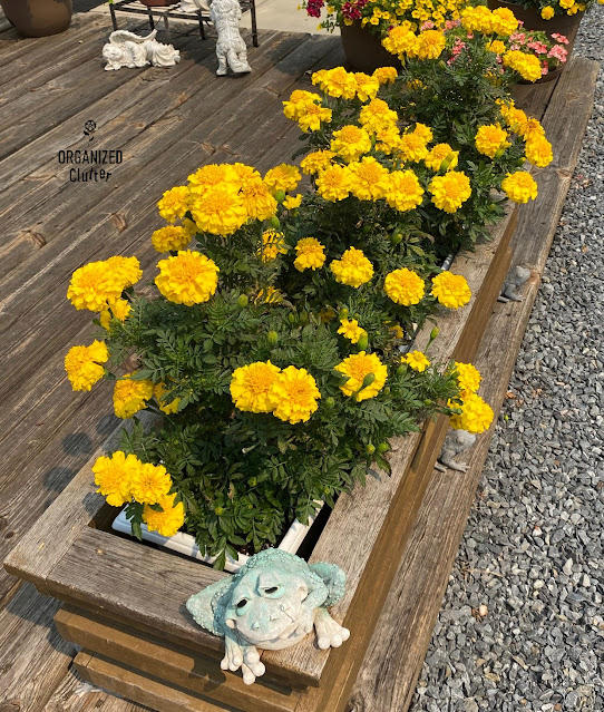 Photo of marigolds in a deck planter