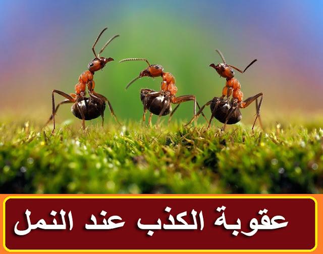 """""""الكذب عند النمل"""" """"عقوبة الكذب عند النمل"""" """"قصة عقوبة الكذب عند النمل"""" """"الكذب"""" """"الكذب عند الاطفال"""" """"الكذب في الاسلام"""" """"الكذب في الحب"""" """"الكذب المباح"""" """"الكذب في المنام"""" """"الكذب في القران"""" """"الكذب والنفاق"""" """"الكذبة البيضاء"""" """"الكذب المرضي"""" """"الكذب المباح في الاسلام"""" """"الكذب القهري وعلاجه"""" """"الكذب الابيض"""" """"الكذب الكذب"""" """"الكذب اسلام ويب"""" """"الكذب التخيلي"""" """"الكذب pdf"""" """"اختبار الكذب bts"""" """"الكذب عند الاطفال pdf"""" """"كذب conjugation"""" """"الكذب doc"""" """"كذبة dxn"""" """"definition الكذب"""" """"كذب download"""" """"مشكلة الكذب doc"""" """"بحث عن الكذب doc"""" """"الكذب عند الاطفال doc"""" """"موضوع عن الكذب doc"""" """"الكذب en français"""" """"كذب english"""" """"كذب en francais"""" """"كذبة en francais"""" """"الكذب ع الزوجه"""" """"الكذب ع الزوج"""" """"الكذب ع الحبيب"""" """"الكذب ع الناس"""" """"الكذب francais"""" """"الكذب fb"""" """"كذبة français"""" """"الكذب في الحلم"""" """"الكذب في"""" """"الكذب في الاحلام"""" """"الكذب goodreads"""" """"الكذب google traduction"""" """"الكذب goodreads quotes"""" """"الكذب gif"""" """"كذب google"""" """"الدب القطبي"""" """"الكوكب الازرق"""" """"الكوكب الاحمر"""" """"الدب الابيض"""" """"الكذب islamqa"""" """"الكذب islamweb"""" """"كذب in english"""" """"الكذب ي"""" """"الكذب meaning in arabic"""" """"الكذب means in english"""" """"حبل الكذب in english"""" """"image الكذب"""" """"joker الكذب"""" """"الكدب ده"""" """"الكذب وخطورته"""" """"الكذب liar"""" """"لعبة الكذب liar game"""" """"لعبة الكذب liar"""" """"الكذب في الجزائر les amis"""" """"l الكذب"""" """"الكذب mensonge"""" """"كذب meaning"""" """"كذب meaning in english"""" """"كذب means"""" """"كذب mean"""" """"كذب meaning hindi"""" """"الكذب ne demek"""" """"كذب nedir"""" """"كذبة ne demek"""" """"الكذب ا"""" """"meaning of الكذب"""" """"الكذب ppt"""" """"الكذب pinterest"""" """"pdf الكذب عند الاطفال"""" """"post الكذب"""" """"كذب plural"""" """"سيكولوجية الكذب pdf"""" """"مقياس الكذب pdf"""" """"الكذب quotes"""" """"الكذب quote"""" """"كذب quotes"""" """"statut الكذب"""" """"statu الكذب"""" """"الكذب tumblr"""" """"الكذب traduction en francais"""" """"كذبه translation"""" """"كذب traduction anglais"""" """"test الكذب"""" """"الكذب youtube"""" """"tiko tm الكذب"""" """"كاشف الكذب uptodown"""" """"جهاز كشف الكذب uptodown"""" """"تطبيق كشف الكذب uptodown"""" """"كذب vertaling"""" """"الكذب wikipedia"""" """"كذب wiktionary"""" """"كذبة wwe"""" """"جهاز كشف الكذب wasla"""" """"الكذب عند الاطفال ويكيبيديا"""" """"الكذب عند الاطفال 3 سنوات"""" """"الكذب عند الاطفال في علم النفس"""" """"الكذب عند الاطفال في سن الخامسة"""