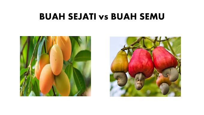 Buah Sejati dan Buah Semu, Apa Perbedaannya?