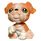 Littlest Pet Shop Special Bulldog (#No #) Pet